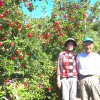 信州を代表する「ふじりんご」と長野県オリジナルの桃「なつっこ」でお歳暮・お中元の品は決まり!