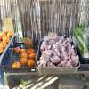 その日採れた安心安全な野菜たちをその日の内に食卓へ。全国発送も可能な静岡県磐田市海老塚の無農薬農園。