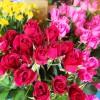 長年の栽培ノウハウと最新のテクノロジー、新しいアイデアを融合し、最高品質の美しいバラを育てる静岡県の老舗バラ園。
