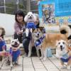 Jリーグに属するプロサッカーチーム「ブラウブリッツ秋田(J3)」を犬と共に応援する秋田市のボランティア団体。